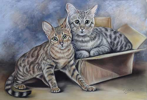 Cat portraits by Irina Petrova