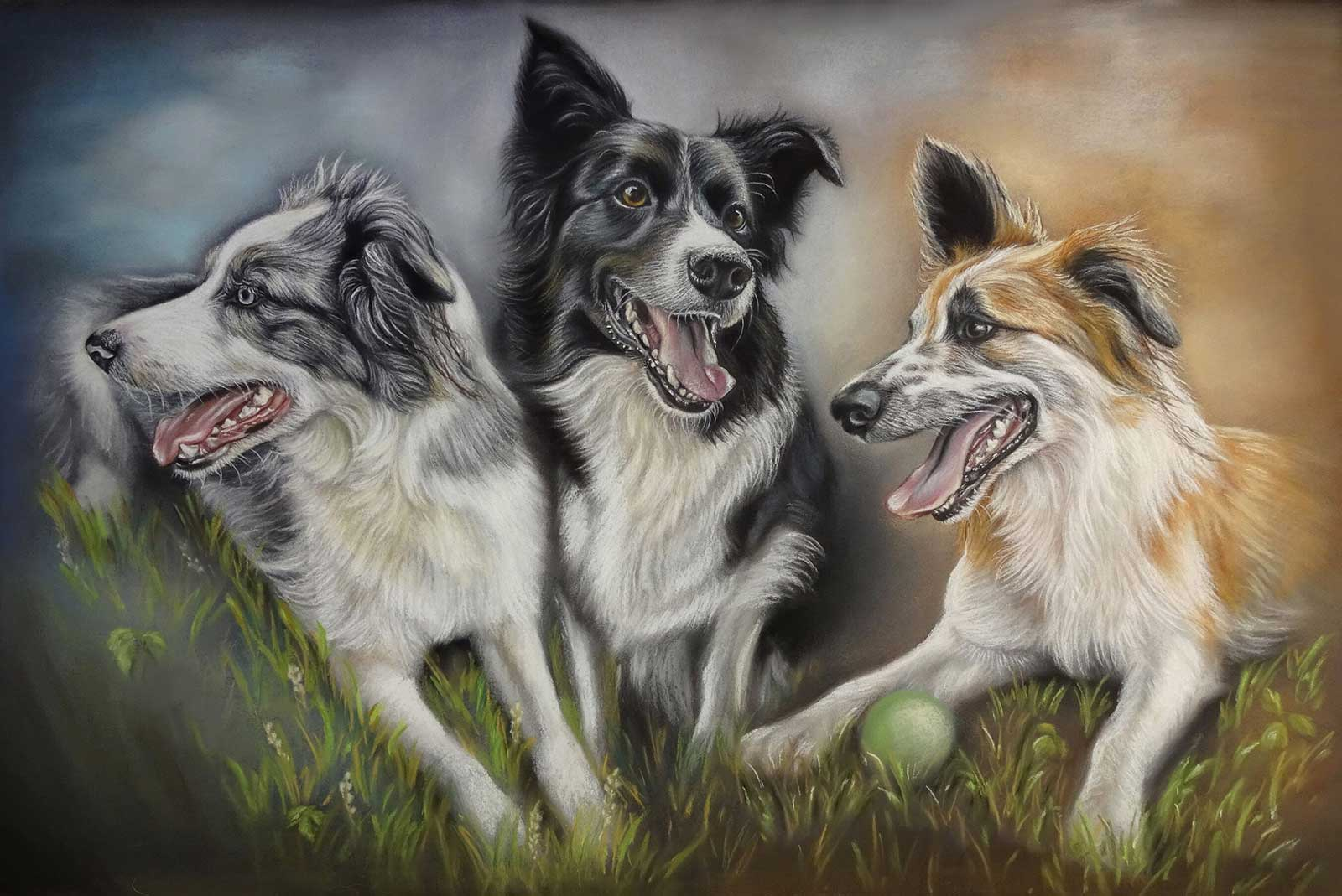 Border Collie Portraits