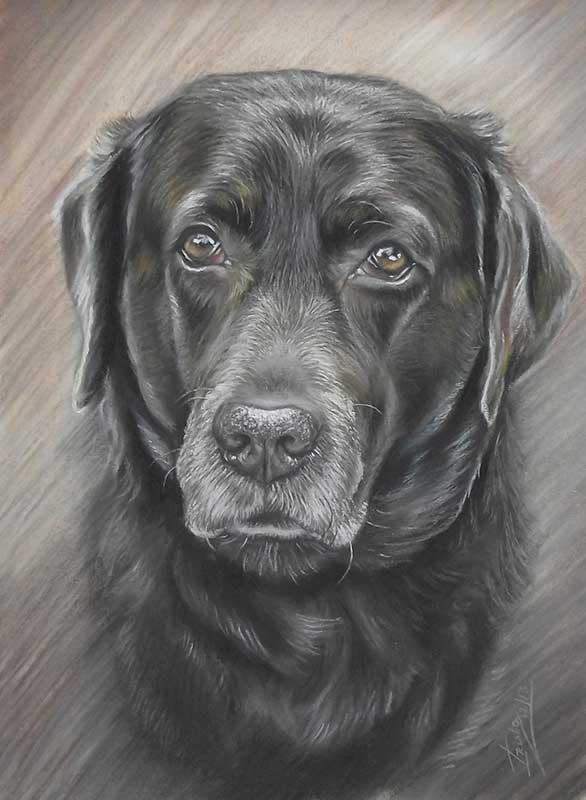 Dog Portraits Hero Image