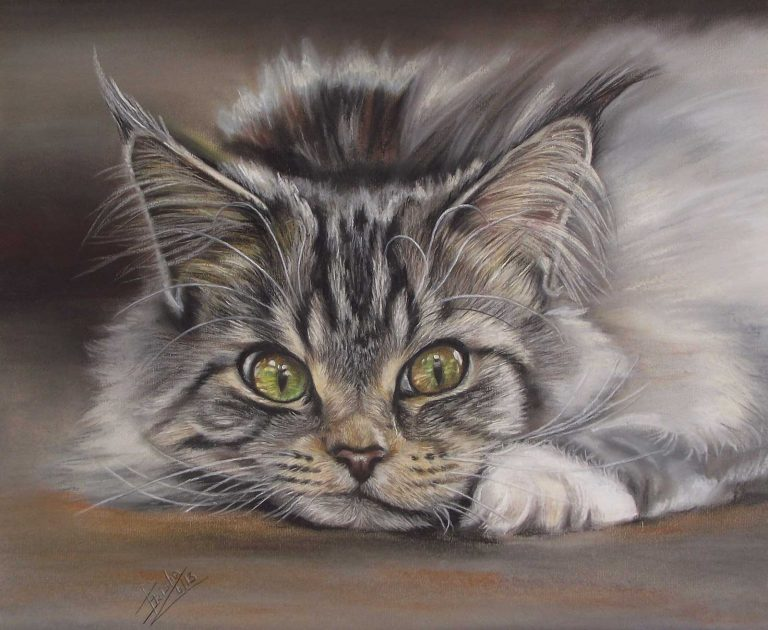 Siberian Cat Portrait