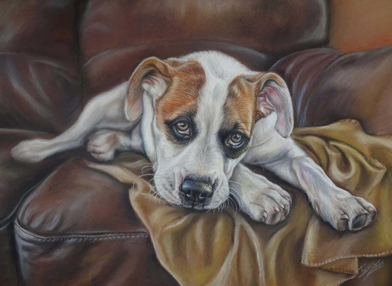 Dog portrait in pastels