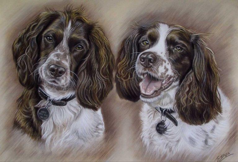 Spaniels Portrait